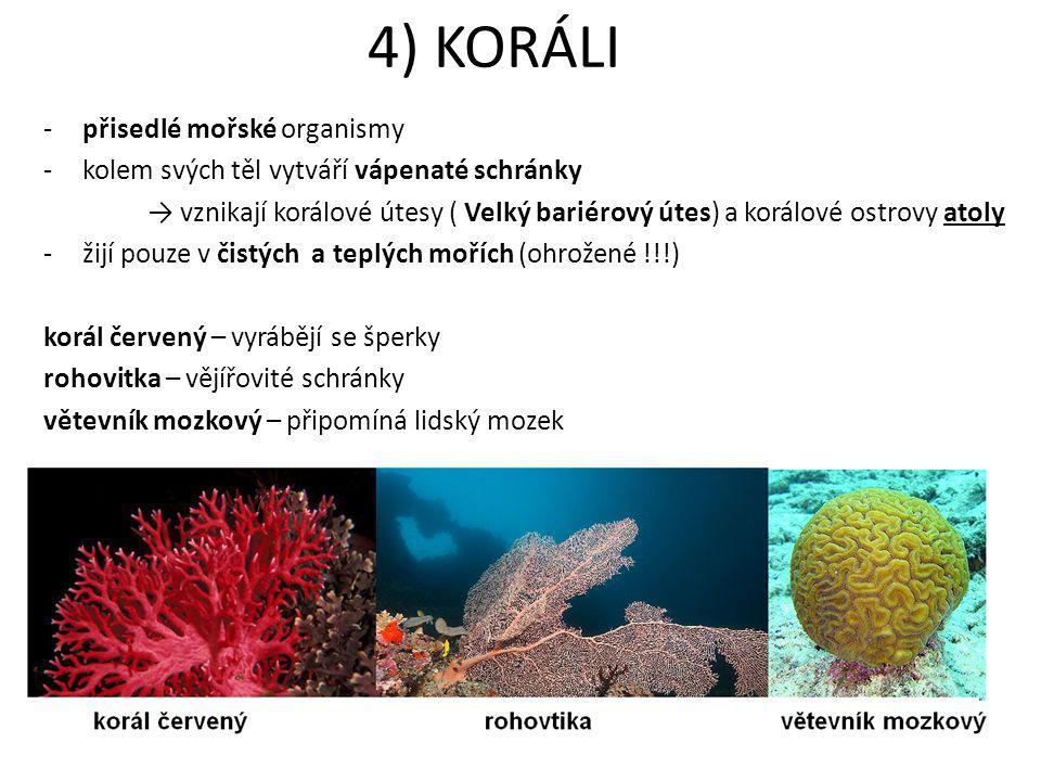4) KORÁLI -přisedlé mořské organismy -kolem svých těl vytváří vápenaté schránky → vznikají korálové útesy ( Velký bariérový útes) a korálové ostrovy a