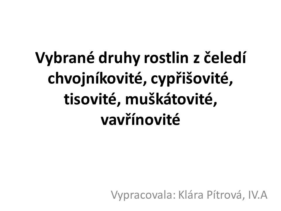 Vybrané druhy rostlin z čeledí chvojníkovité, cypřišovité, tisovité, muškátovité, vavřínovité Vypracovala: Klára Pítrová, IV.A