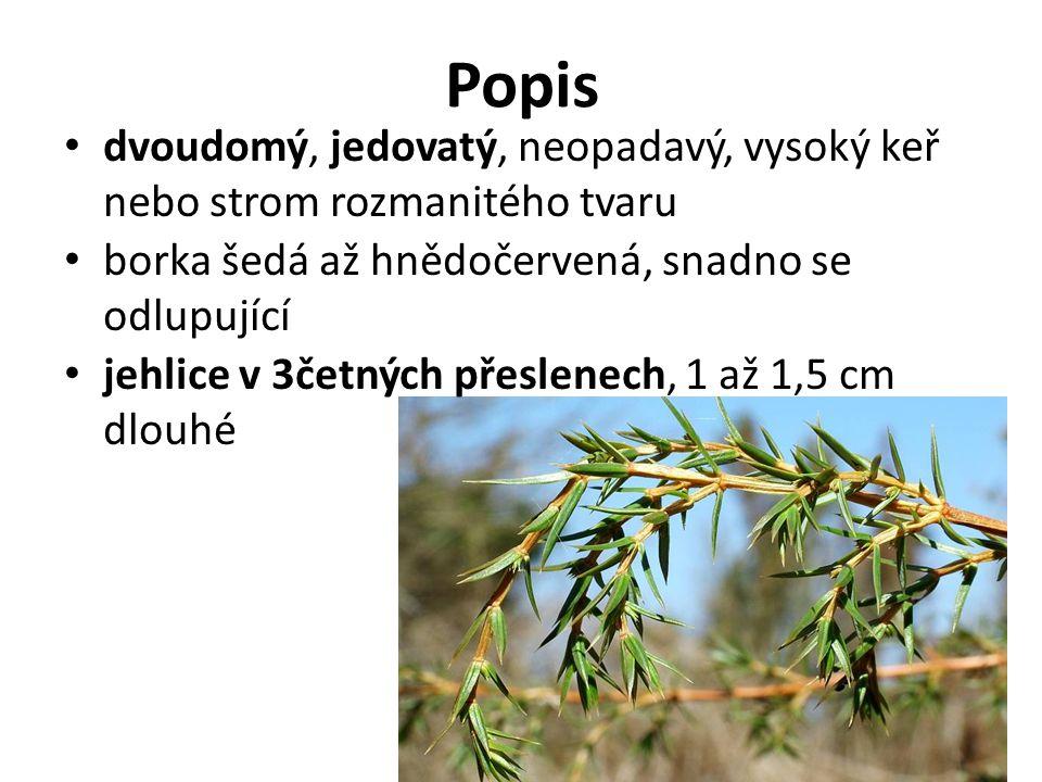 Popis dvoudomý, jedovatý, neopadavý, vysoký keř nebo strom rozmanitého tvaru borka šedá až hnědočervená, snadno se odlupující jehlice v 3četných přesl
