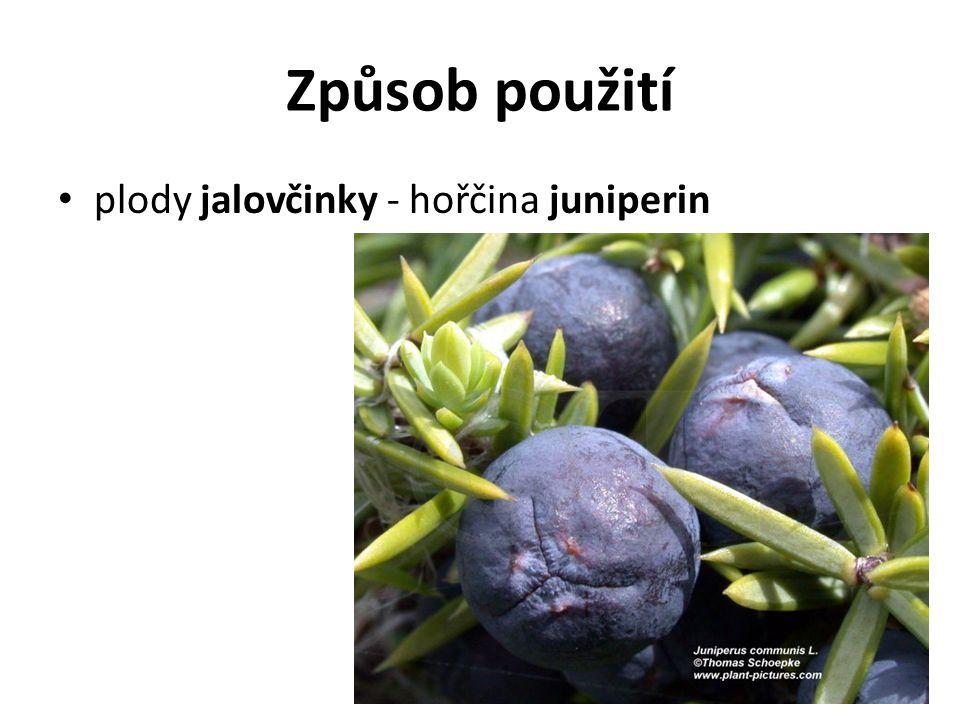 Způsob použití plody jalovčinky - hořčina juniperin