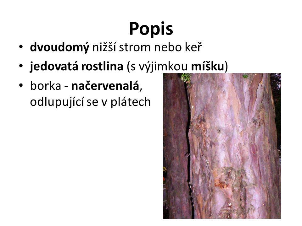 Popis dvoudomý nižší strom nebo keř jedovatá rostlina (s výjimkou míšku) borka - načervenalá, odlupující se v plátech