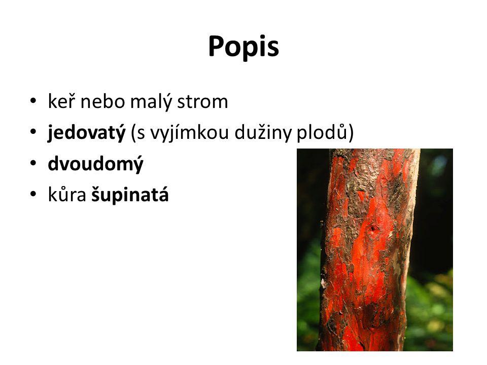 Popis keř nebo malý strom jedovatý (s vyjímkou dužiny plodů) dvoudomý kůra šupinatá