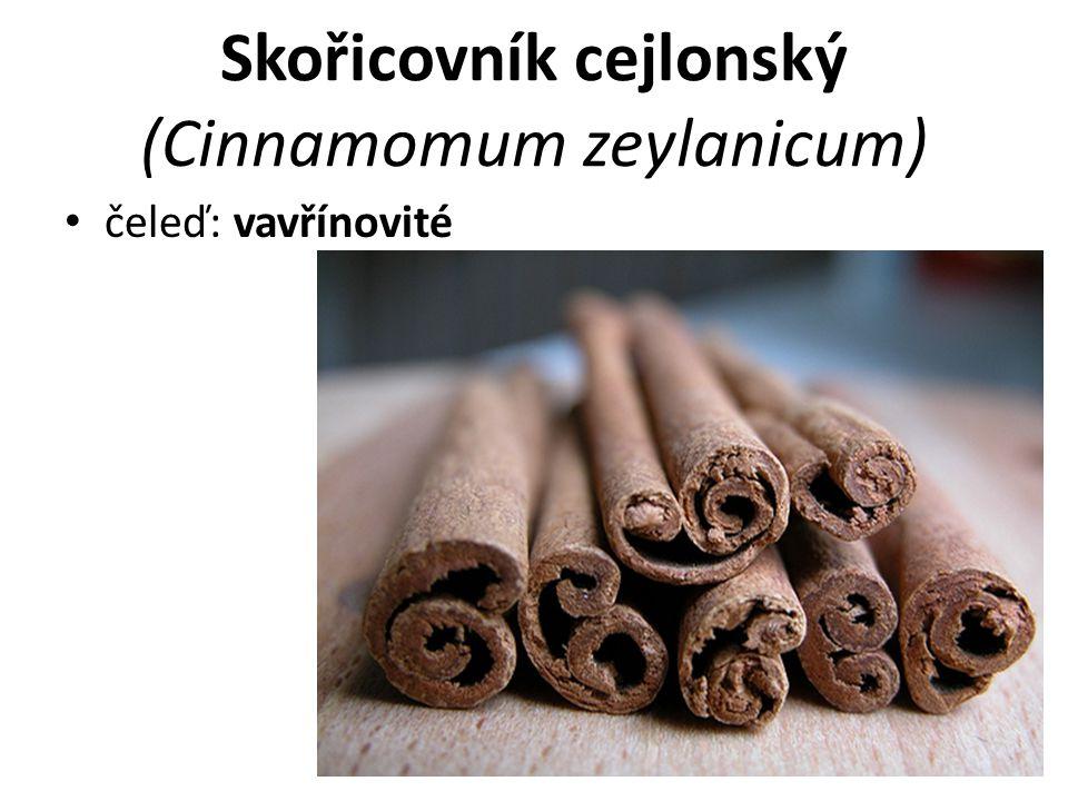 Skořicovník cejlonský (Cinnamomum zeylanicum) čeleď: vavřínovité