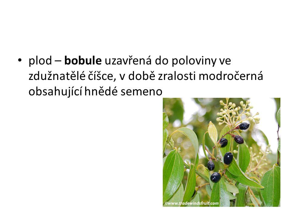 plod – bobule uzavřená do poloviny ve zdužnatělé číšce, v době zralosti modročerná obsahující hnědé semeno