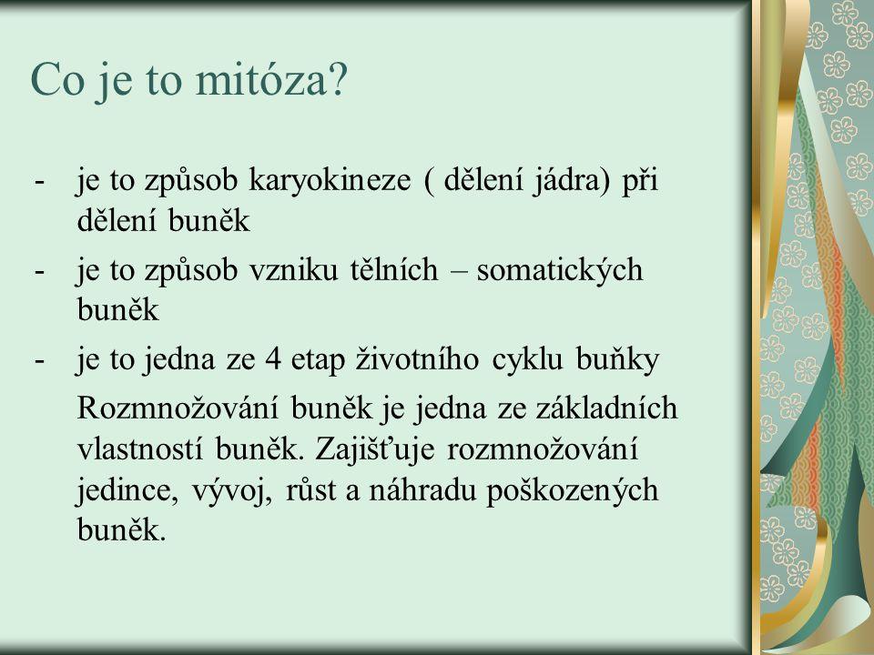 Co je to mitóza.