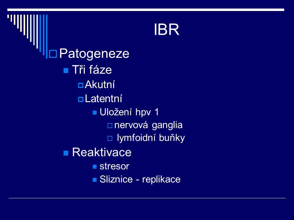 IBR  Patogeneze Tři fáze  Akutní  Latentní Uložení hpv 1  nervová ganglia  lymfoidní buňky Reaktivace stresor Sliznice - replikace