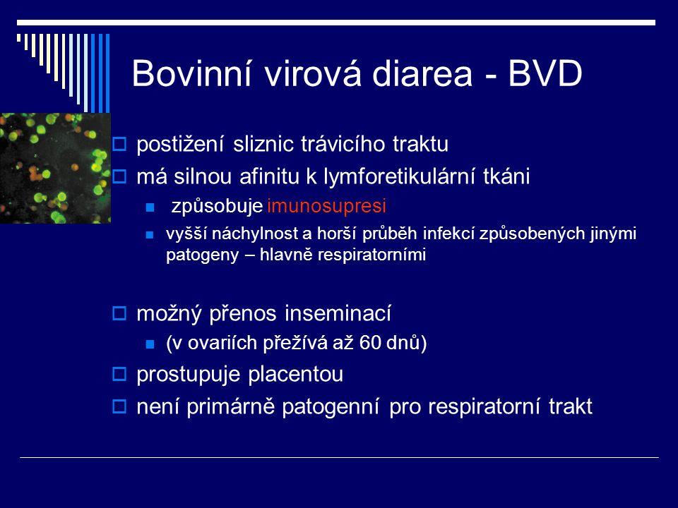 Bovinní virová diarea - BVD  postižení sliznic trávicího traktu  má silnou afinitu k lymforetikulární tkáni způsobuje imunosupresi vyšší náchylnost