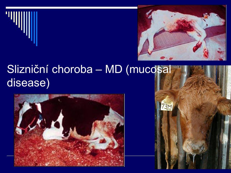 Slizniční choroba – MD (mucosal disease)