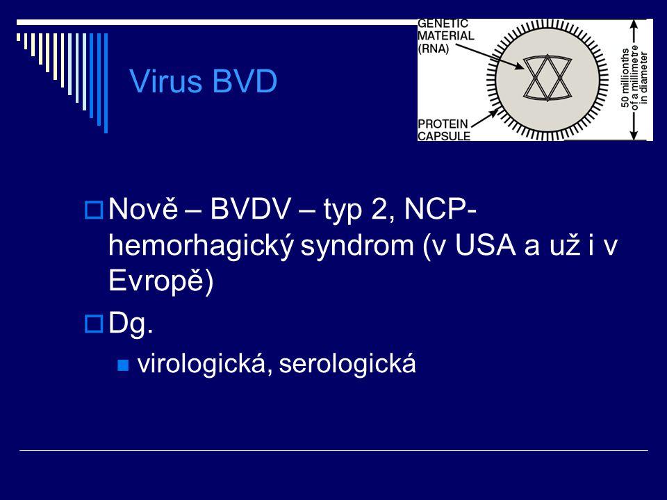 Virus BVD  Nově – BVDV – typ 2, NCP- hemorhagický syndrom (v USA a už i v Evropě)  Dg. virologická, serologická