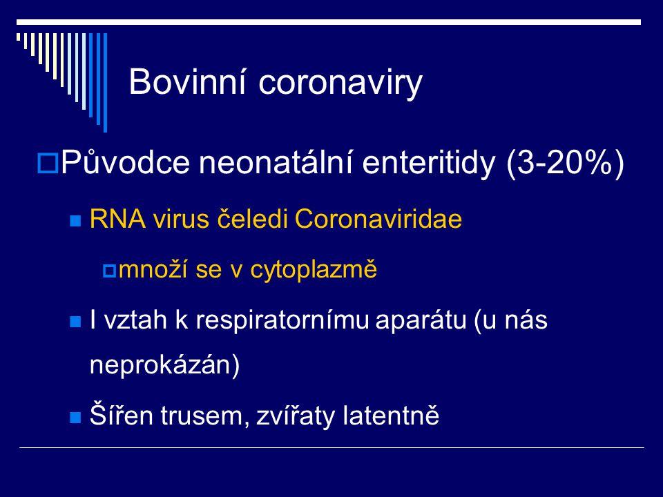 Bovinní coronaviry  Původce neonatální enteritidy (3-20%) RNA virus čeledi Coronaviridae  množí se v cytoplazmě I vztah k respiratornímu aparátu (u
