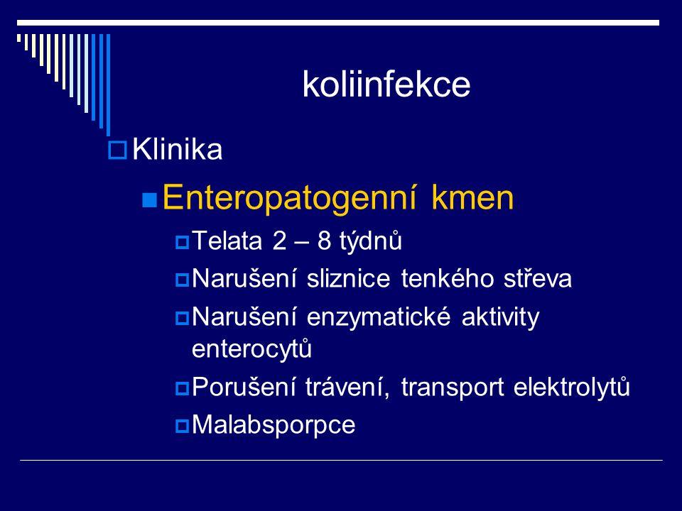 koliinfekce  Klinika Enteropatogenní kmen  Telata 2 – 8 týdnů  Narušení sliznice tenkého střeva  Narušení enzymatické aktivity enterocytů  Poruše