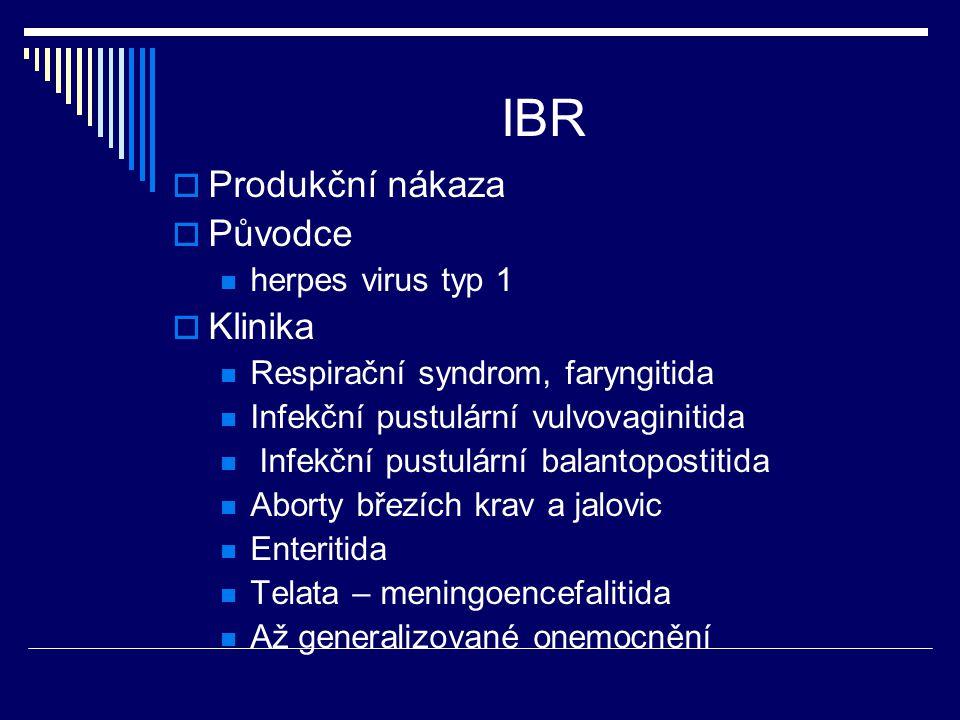 IBR  Produkční nákaza  Původce herpes virus typ 1  Klinika Respirační syndrom, faryngitida Infekční pustulární vulvovaginitida Infekční pustulární
