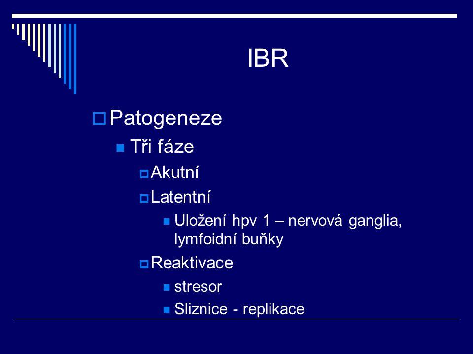 IBR  Patogeneze Tři fáze  Akutní  Latentní Uložení hpv 1 – nervová ganglia, lymfoidní buňky  Reaktivace stresor Sliznice - replikace