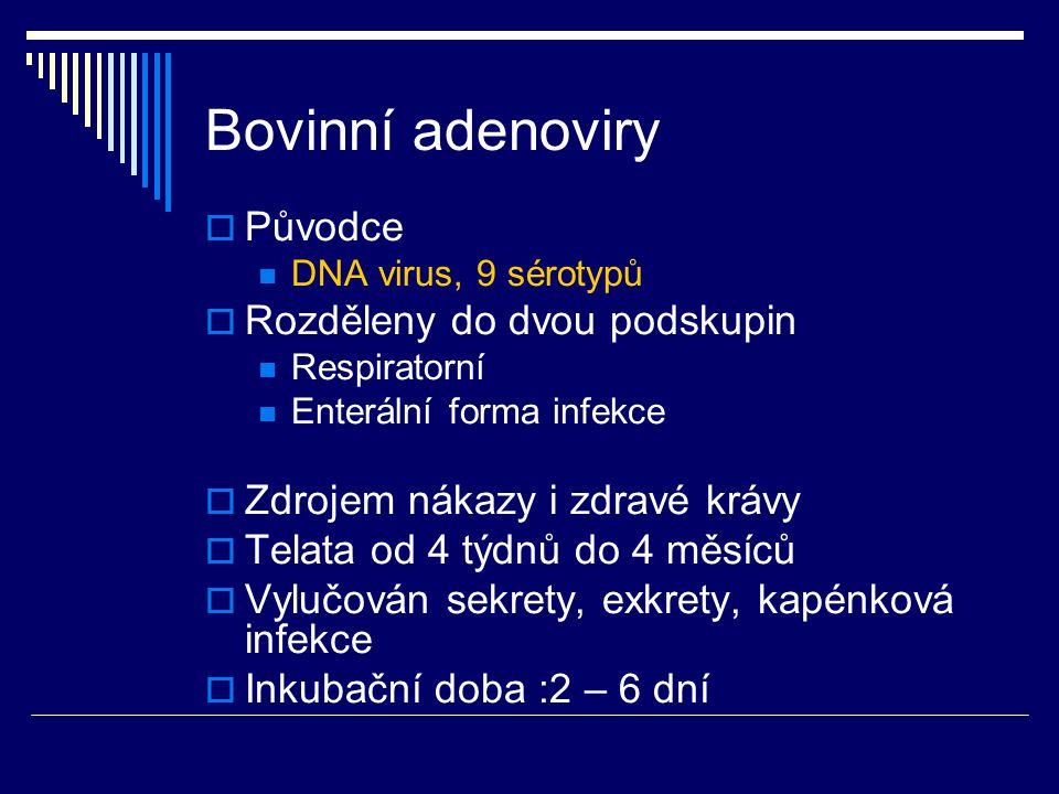 Bovinní adenoviry  Původce DNA virus, 9 sérotypů  Rozděleny do dvou podskupin Respiratorní Enterální forma infekce  Zdrojem nákazy i zdravé krávy 
