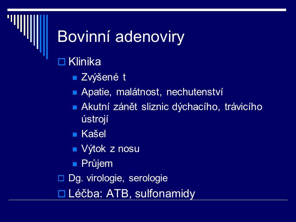 Bovinní adenoviry  Klinika Zvýšené t Apatie, malátnost, nechutenství Akutní zánět sliznic dýchacího, trávicího ústrojí Kašel Výtok z nosu Průjem  Dg