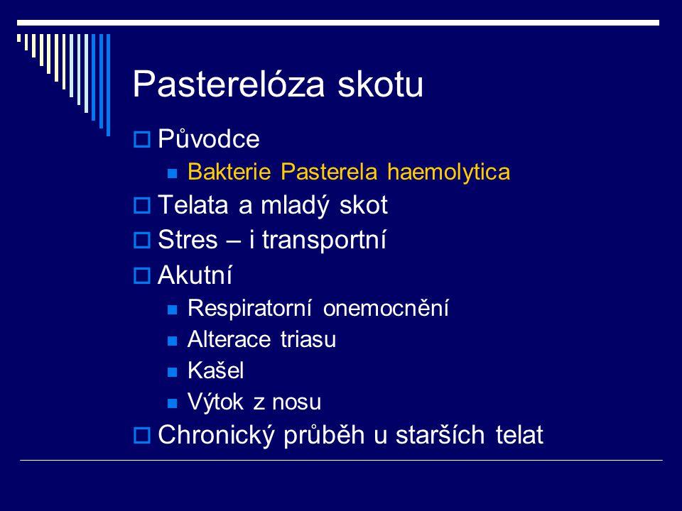Pasterelóza skotu  Původce Bakterie Pasterela haemolytica  Telata a mladý skot  Stres – i transportní  Akutní Respiratorní onemocnění Alterace tri