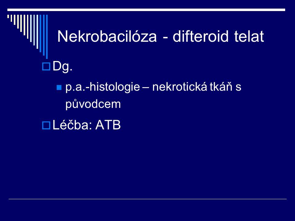  Dg. p.a.-histologie – nekrotická tkáň s původcem  Léčba: ATB Nekrobacilóza - difteroid telat