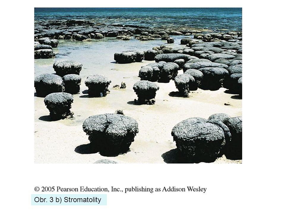 Obr. 3 b) Stromatolity
