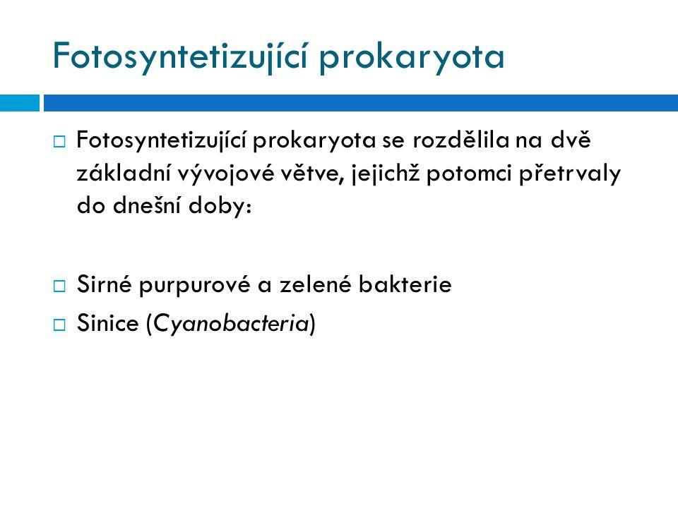 Fotosyntetizující prokaryota  Fotosyntetizující prokaryota se rozdělila na dvě základní vývojové větve, jejichž potomci přetrvaly do dnešní doby:  S