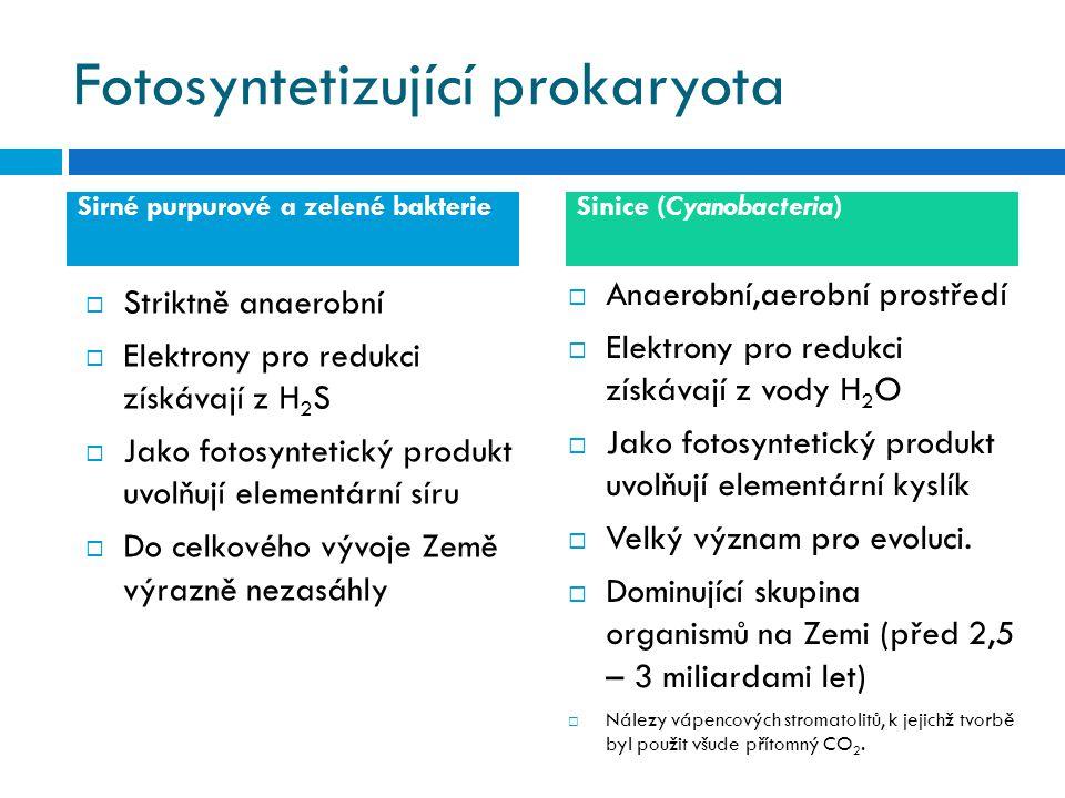 Fotosyntetizující prokaryota  Striktně anaerobní  Elektrony pro redukci získávají z H 2 S  Jako fotosyntetický produkt uvolňují elementární síru 