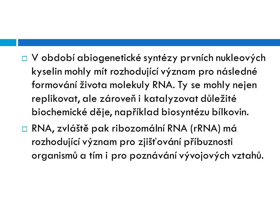  V období abiogenetické syntézy prvních nukleových kyselin mohly mít rozhodující význam pro následné formování života molekuly RNA. Ty se mohly nejen