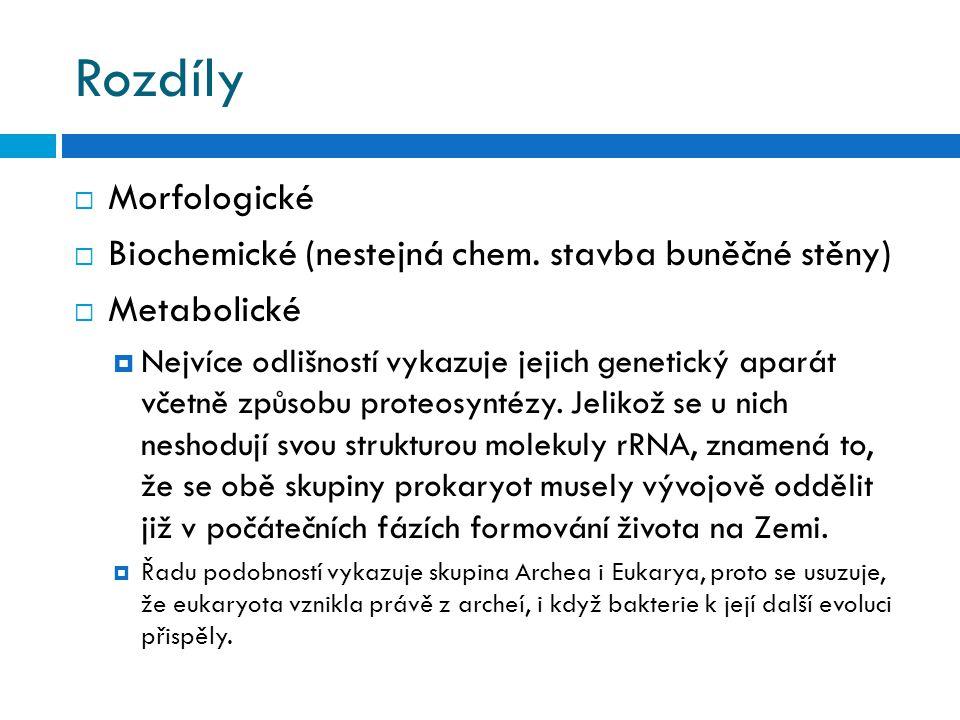Rozdíly  Morfologické  Biochemické (nestejná chem. stavba buněčné stěny)  Metabolické  Nejvíce odlišností vykazuje jejich genetický aparát včetně