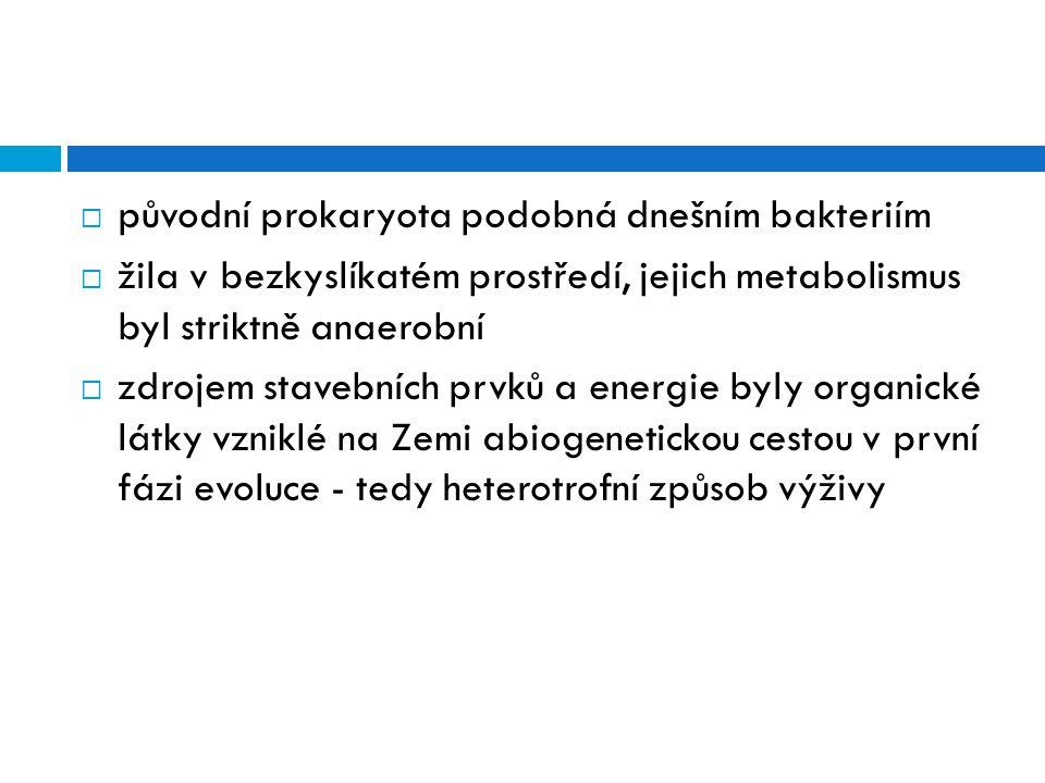  původní prokaryota podobná dnešním bakteriím  žila v bezkyslíkatém prostředí, jejich metabolismus byl striktně anaerobní  zdrojem stavebních prvků
