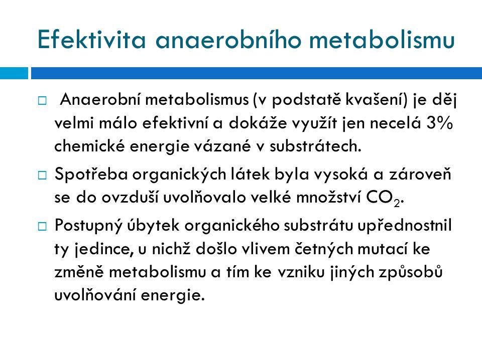 Efektivita anaerobního metabolismu  Anaerobní metabolismus (v podstatě kvašení) je děj velmi málo efektivní a dokáže využít jen necelá 3% chemické en