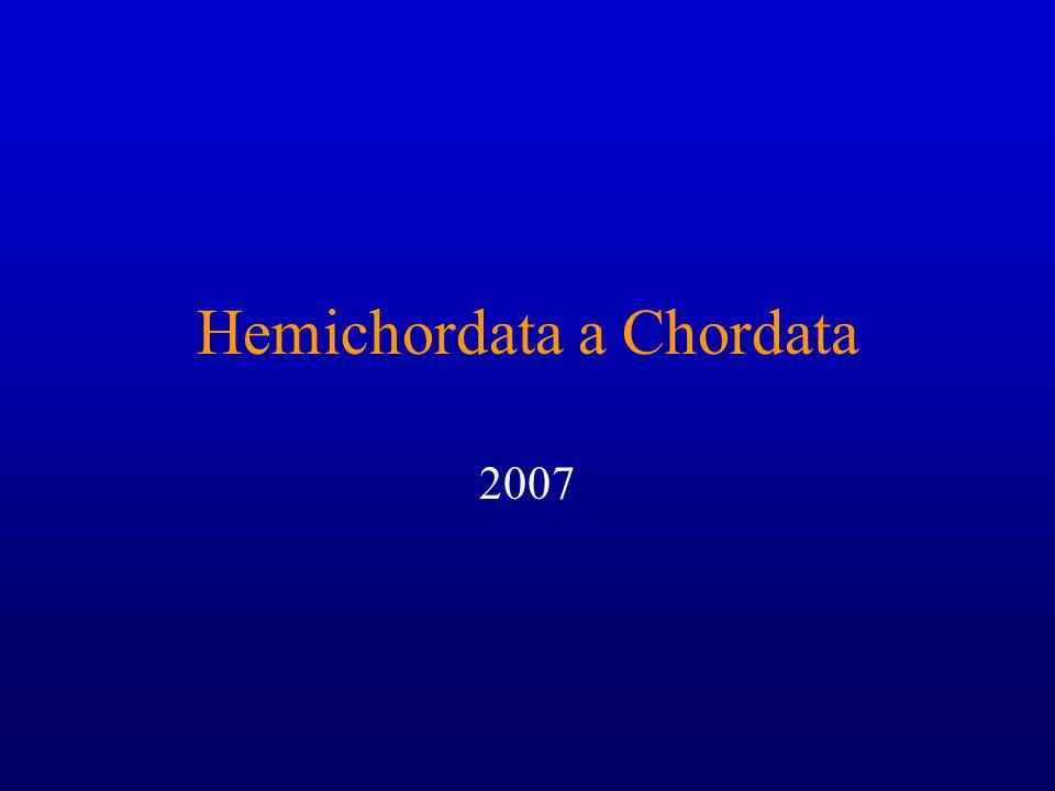 Hemichordata a Chordata 2007