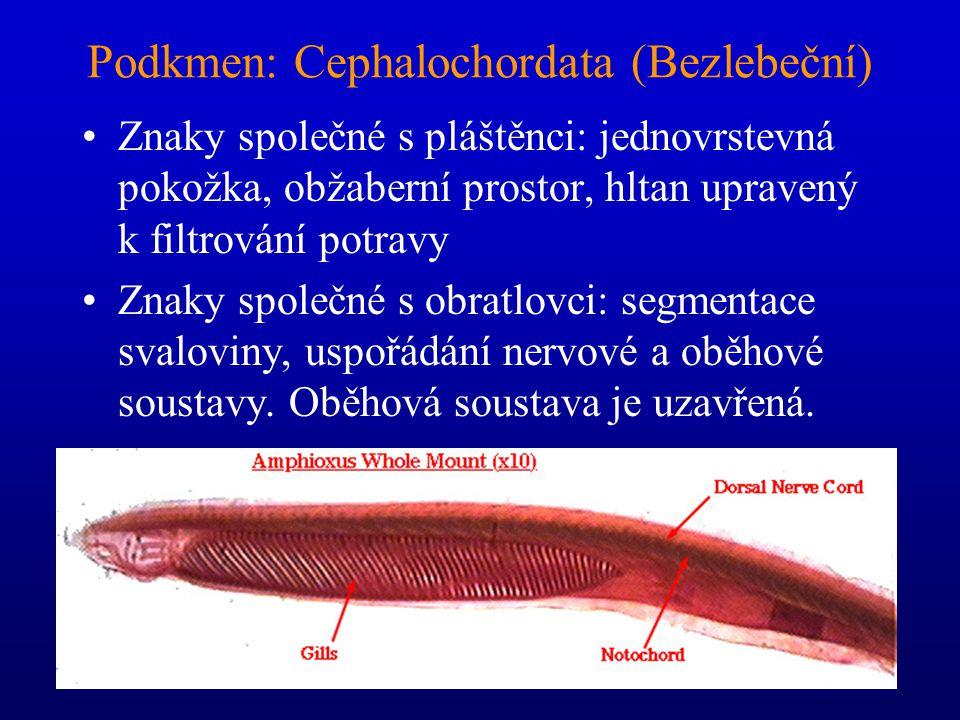 Salpy (Thaliacea) a Vršenky (Copelata) Salpy: složité rozmnožování.