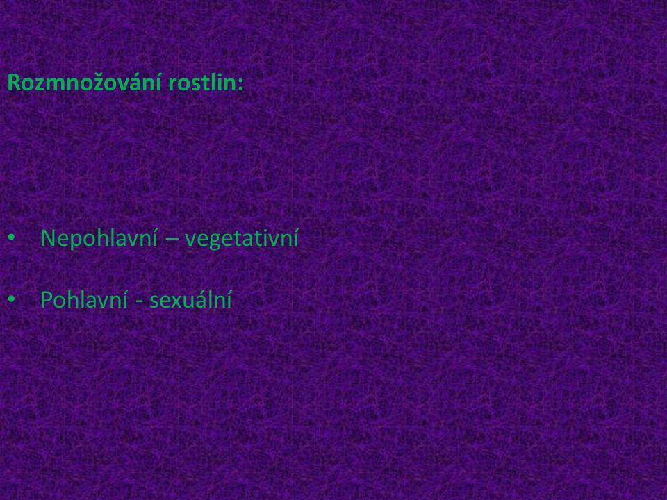Rozmnožování rostlin: Nepohlavní – vegetativní Pohlavní - sexuální