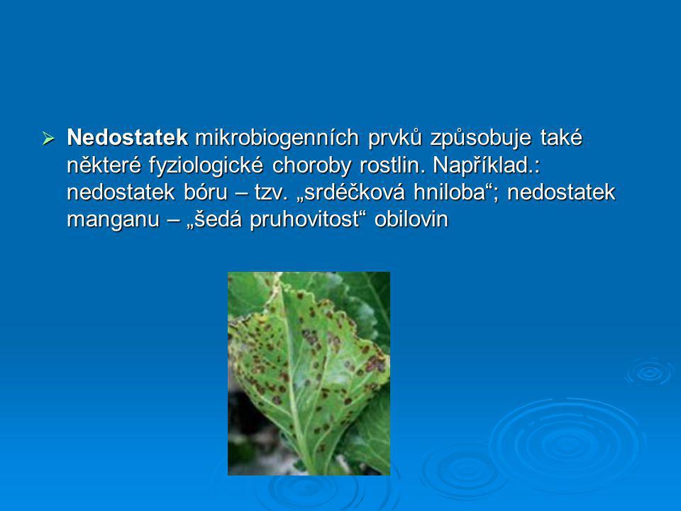 """ Nedostatek mikrobiogenních prvků způsobuje také některé fyziologické choroby rostlin. Například.: nedostatek bóru – tzv. """"srdéčková hniloba""""; nedost"""
