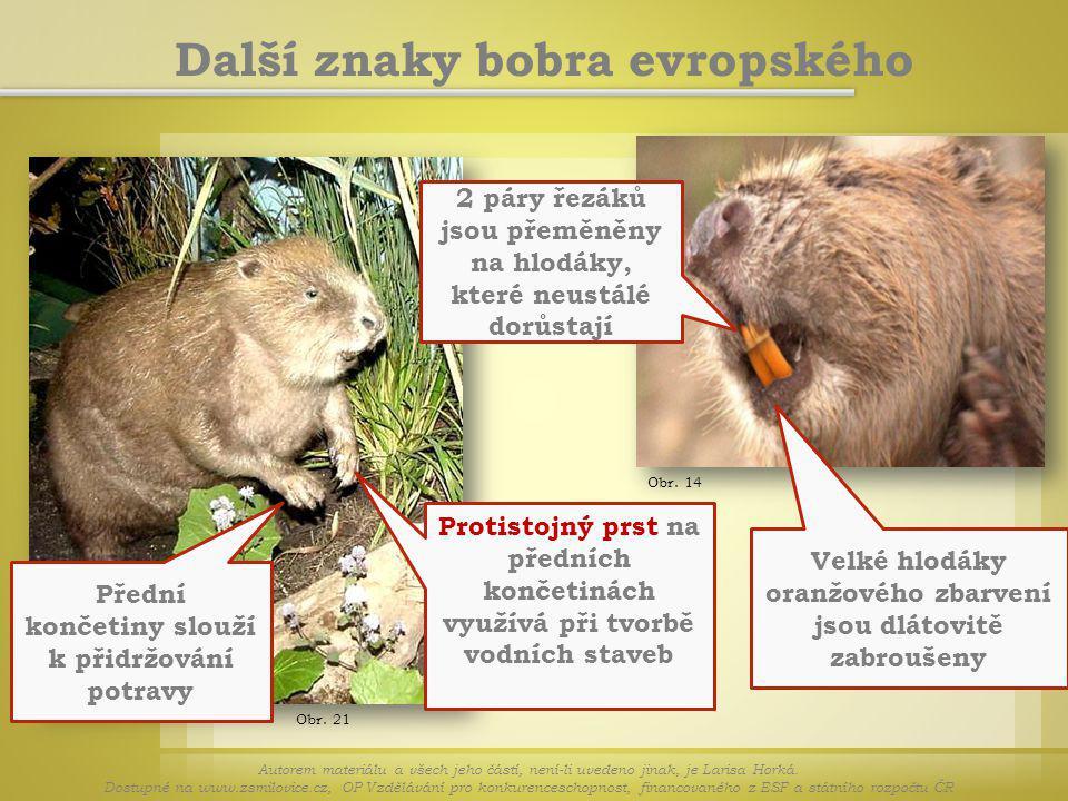 Obr. 21 Další znaky bobra evropského Autorem materiálu a všech jeho částí, není-li uvedeno jinak, je Larisa Horká. Dostupné na www.zsmilovice.cz, OP V