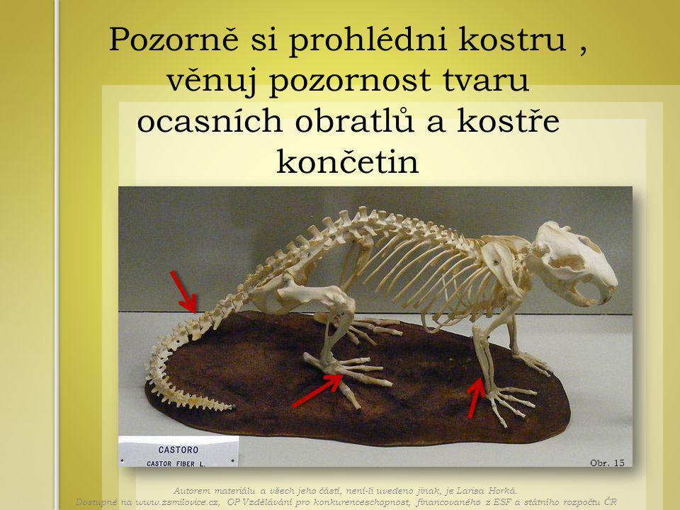 Pozorně si prohlédni kostru, věnuj pozornost tvaru ocasních obratlů a kostře končetin Obr.