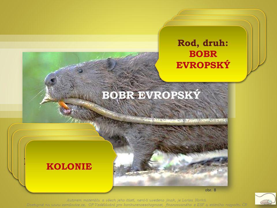 obr. 8 BOBR EVROPSKÝ Bobři žijí v koloniích Kolonie se skládá z rodičů a mláďat S rodiči jsou loňská a letošní mláďata KOLONIE Autorem materiálu a vše