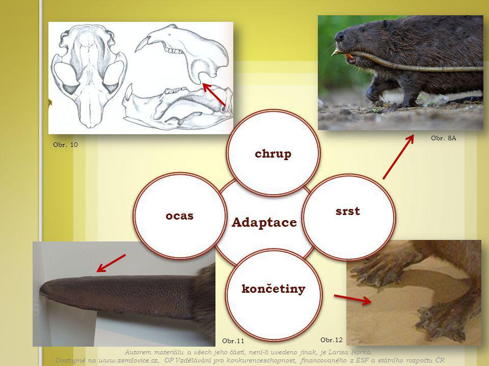 Obr. 8A Obr.12 Obr.11 Obr. 10 Adaptace chrup srst končetiny ocas Autorem materiálu a všech jeho částí, není-li uvedeno jinak, je Larisa Horká. Dostupn