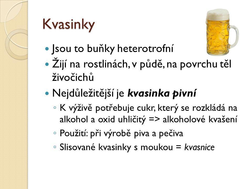 Kvasinky Jsou to buňky heterotrofní Žijí na rostlinách, v půdě, na povrchu těl živočichů Nejdůležitější je kvasinka pivní ◦ K výživě potřebuje cukr, který se rozkládá na alkohol a oxid uhličitý => alkoholové kvašení ◦ Použití: při výrobě piva a pečiva ◦ Slisované kvasinky s moukou = kvasnice