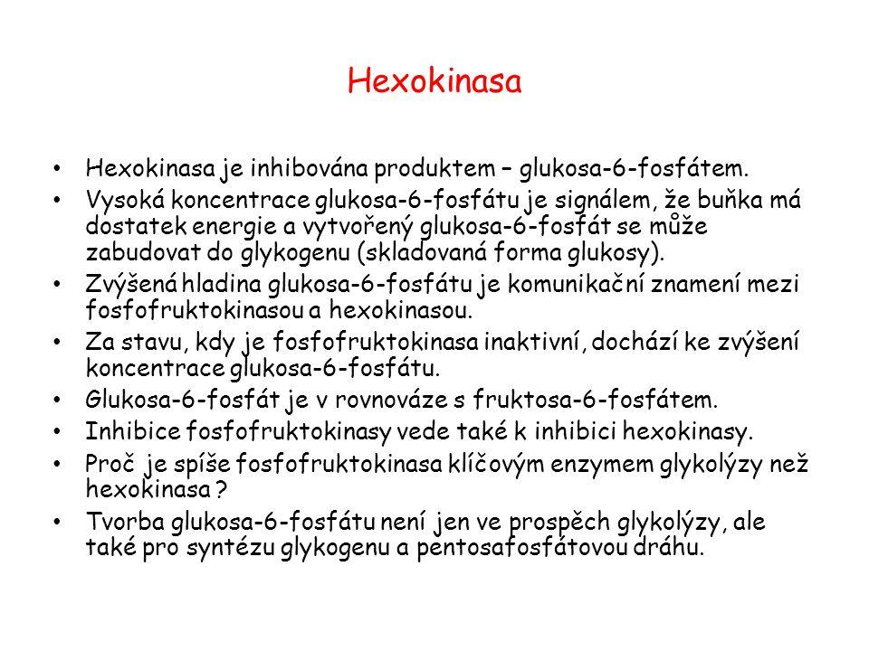 Hexokinasa Hexokinasa je inhibována produktem – glukosa-6-fosfátem. Vysoká koncentrace glukosa-6-fosfátu je signálem, že buňka má dostatek energie a v