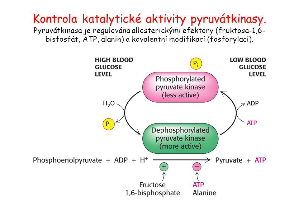 Kontrola katalytické aktivity pyruvátkinasy. Pyruvátkinasa je regulována allosterickými efektory (fruktosa-1,6- bisfosfát, ATP, alanin) a kovalentní m
