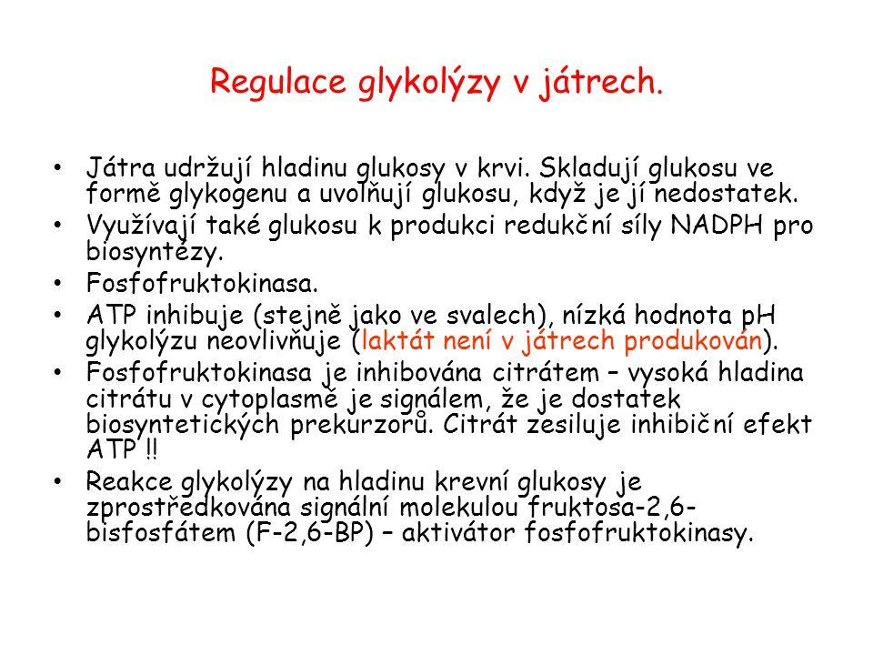 Regulace glykolýzy v játrech. Játra udržují hladinu glukosy v krvi. Skladují glukosu ve formě glykogenu a uvolňují glukosu, když je jí nedostatek. Vyu