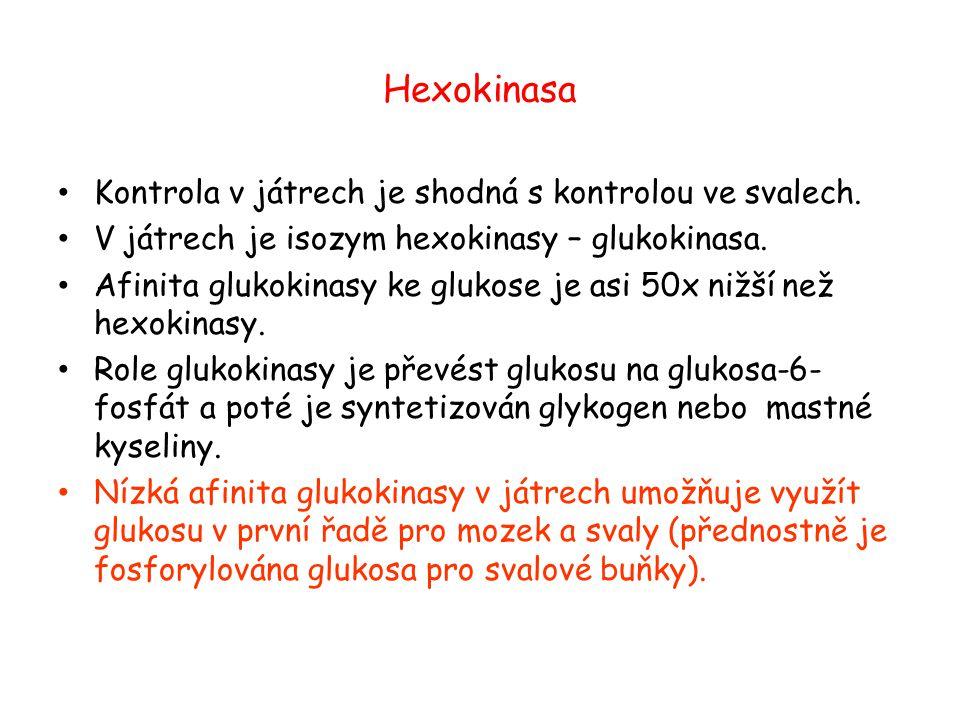 Hexokinasa Kontrola v játrech je shodná s kontrolou ve svalech. V játrech je isozym hexokinasy – glukokinasa. Afinita glukokinasy ke glukose je asi 50