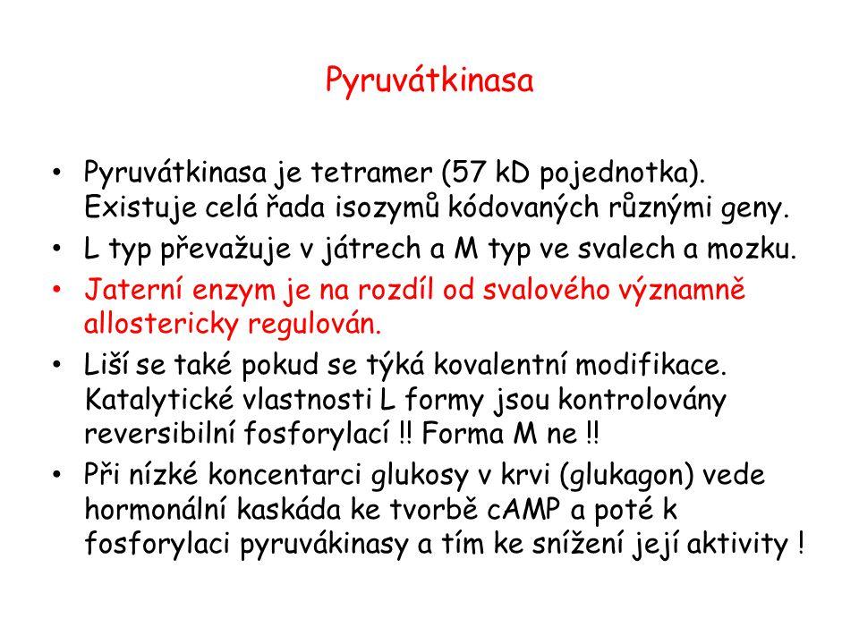 Pyruvátkinasa Pyruvátkinasa je tetramer (57 kD pojednotka). Existuje celá řada isozymů kódovaných různými geny. L typ převažuje v játrech a M typ ve s