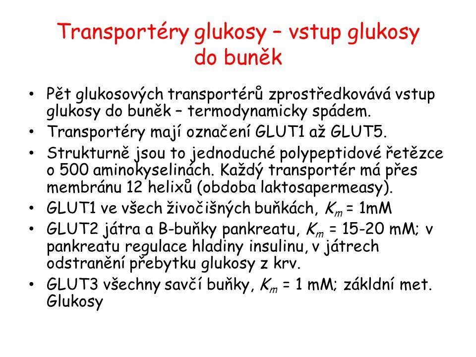 Transportéry glukosy – vstup glukosy do buněk Pět glukosových transportérů zprostředkovává vstup glukosy do buněk – termodynamicky spádem. Transportér