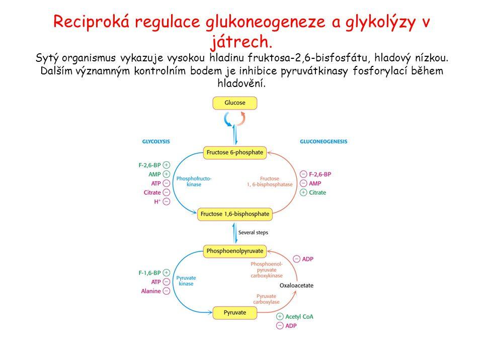 Reciproká regulace glukoneogeneze a glykolýzy v játrech. Sytý organismus vykazuje vysokou hladinu fruktosa-2,6-bisfosfátu, hladový nízkou. Dalším význ