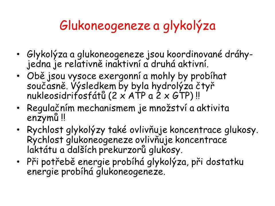 Glukoneogeneze a glykolýza Glykolýza a glukoneogeneze jsou koordinované dráhy- jedna je relativně inaktivní a druhá aktivní. Obě jsou vysoce exergonní