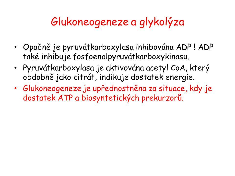 Glukoneogeneze a glykolýza Opačně je pyruvátkarboxylasa inhibována ADP ! ADP také inhibuje fosfoenolpyruvátkarboxykinasu. Pyruvátkarboxylasa je aktivo