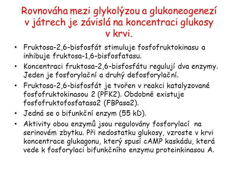 Rovnováha mezi glykolýzou a glukoneogenezí v játrech je závislá na koncentraci glukosy v krvi. Fruktosa-2,6-bisfosfát stimuluje fosfofruktokinasu a in