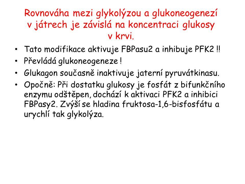 Rovnováha mezi glykolýzou a glukoneogenezí v játrech je závislá na koncentraci glukosy v krvi. Tato modifikace aktivuje FBPasu2 a inhibuje PFK2 !! Pře