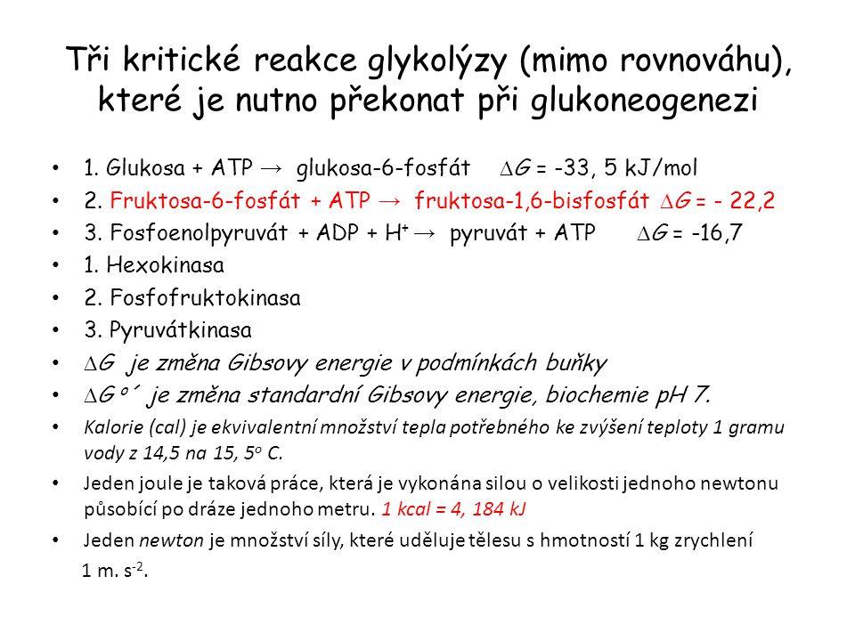 Tři kritické reakce glykolýzy (mimo rovnováhu), které je nutno překonat při glukoneogenezi 1. Glukosa + ATP → glukosa-6-fosfát  G = -33, 5 kJ/mol 2.