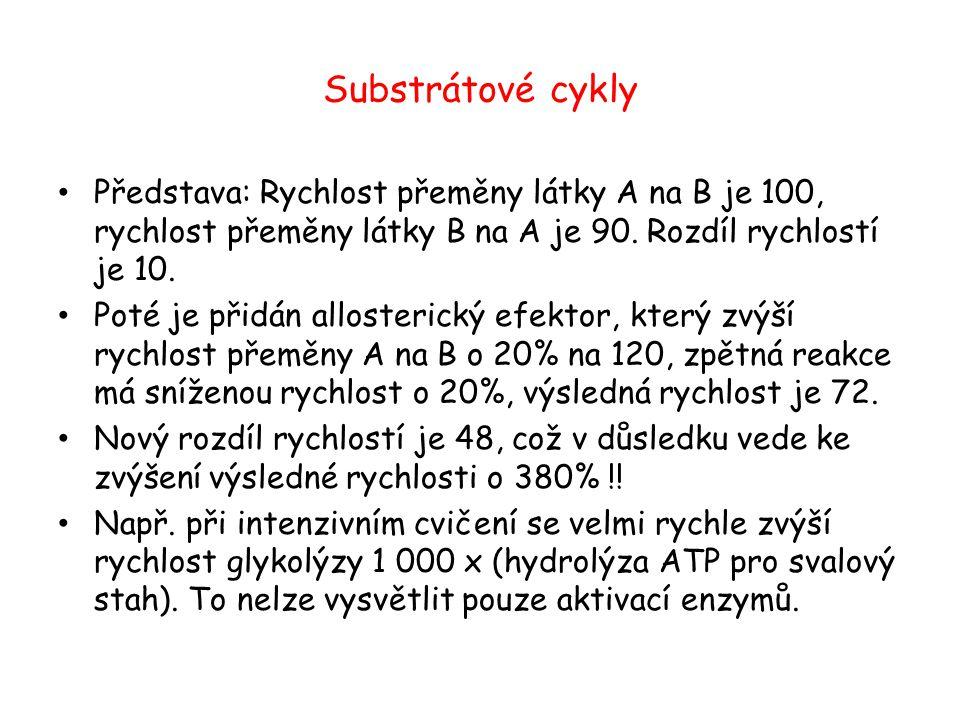 Substrátové cykly Představa: Rychlost přeměny látky A na B je 100, rychlost přeměny látky B na A je 90. Rozdíl rychlostí je 10. Poté je přidán alloste